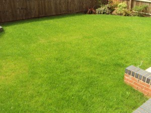 lawn_treatments_2
